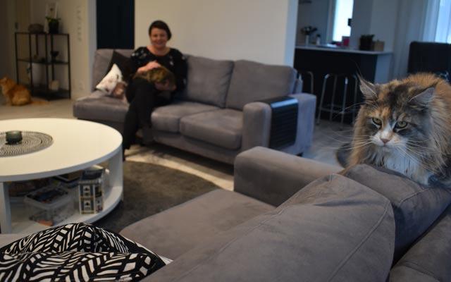 Ninan-kissa-sohvalla